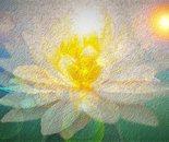 Two Swans & Lotus - O1