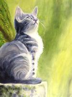 'Grey Kitten'