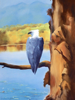 Cattana Sunrise. Sea eagle Perch