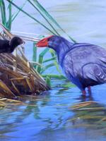 Swamp Hen Maternal