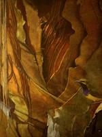 Transient Light . Sunbird