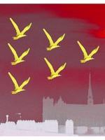 Birds Over Amiens
