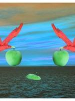 Pomme de Mer