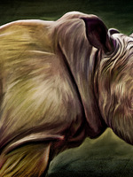 Proud Rhino