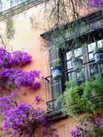 Bougainvillea Window