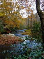 Toe River Stream II