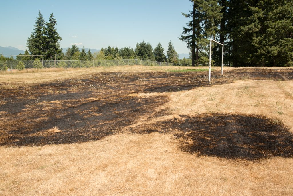 The recent spell of hot weather has caused very dry conditions in Surrey, increasing the risk of brush fires. Despite last weekend's rainfall, the local forests and grasslands remain extremely dry and can easily be set ablaze by discarded cigarettes or other burning objects as evidenced by this grass fire which got started near the Anniedale School near 176th and the Trans Canada Highway.    Photo by Ray Hudson