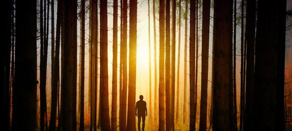 10 datos curiosos sobre la importancia de los árboles en nuestra vida