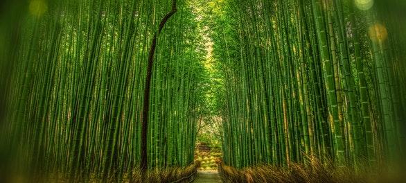 Conoce algunos beneficios del Bambú en 5 pasos