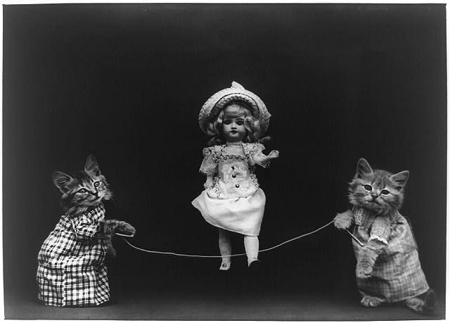 Cats and doll
