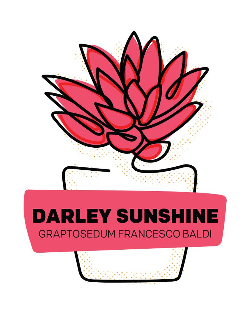 Darley Sunshine