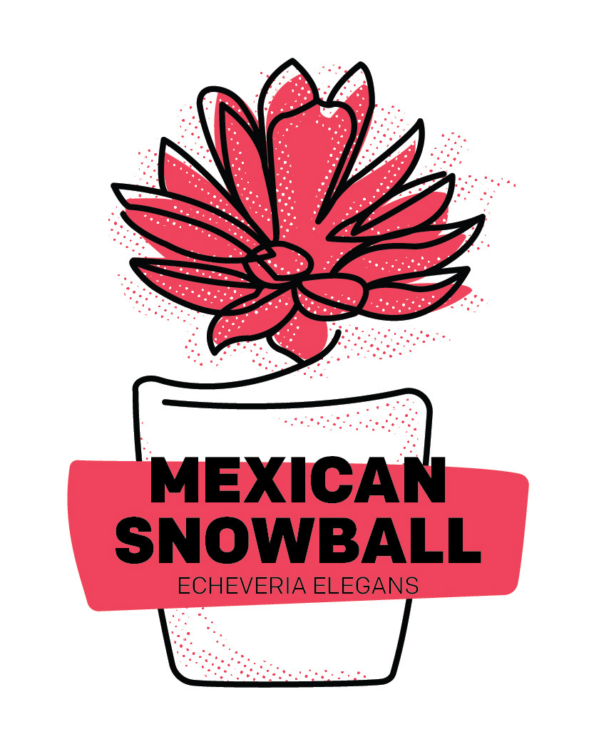 Mexican Snowball