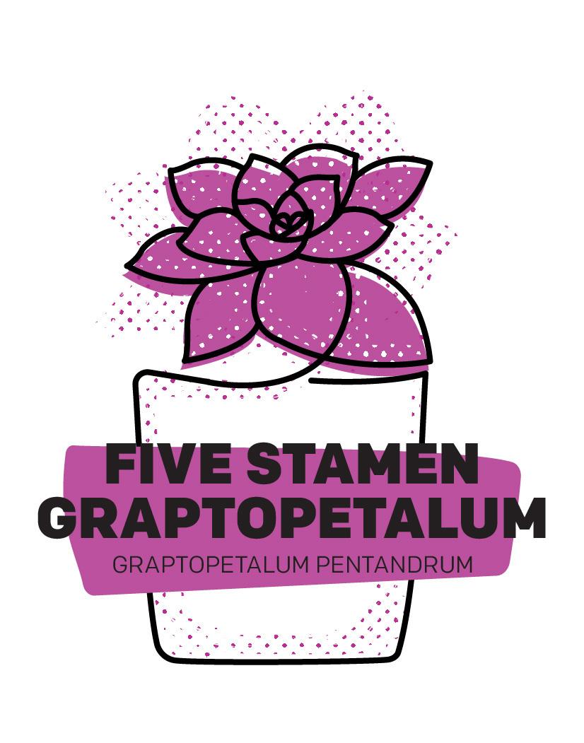 Five Stamen Graptopetalum