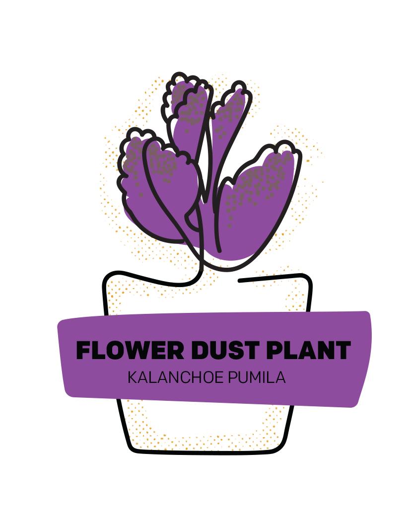 Flower Dust Plant