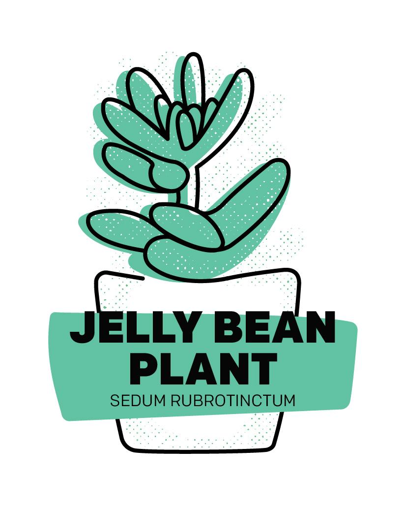 Jelly Bean Plant