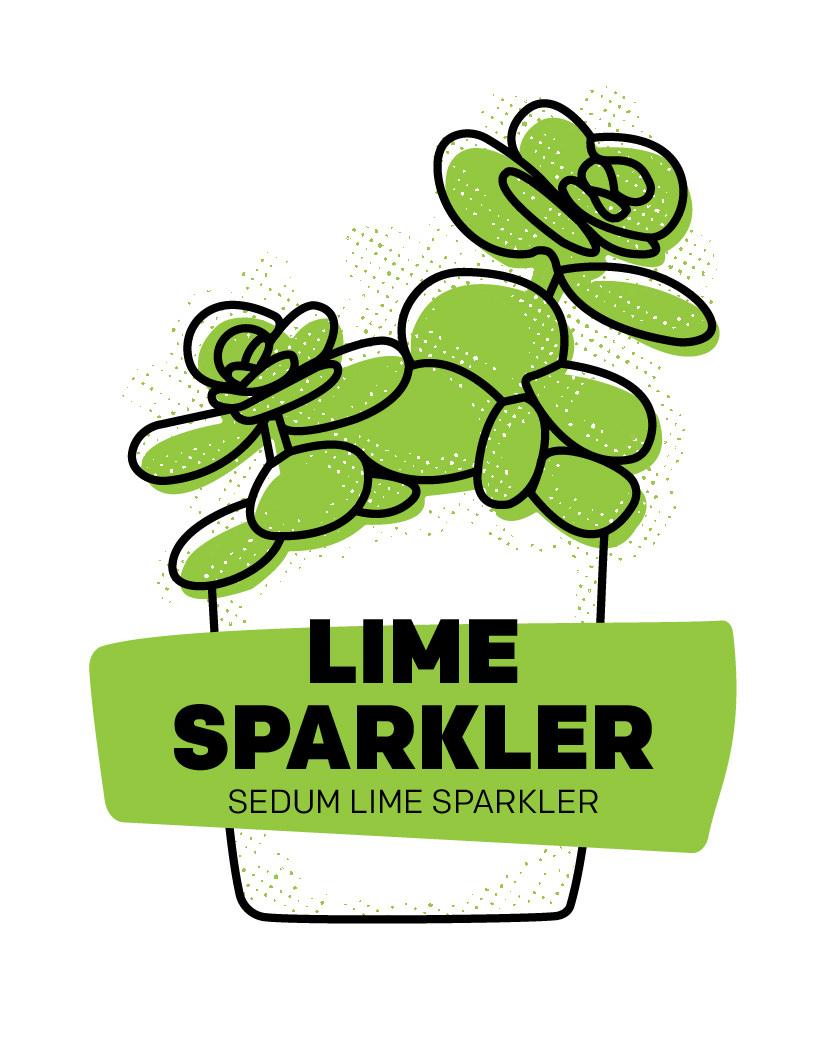 Lime Sparkler