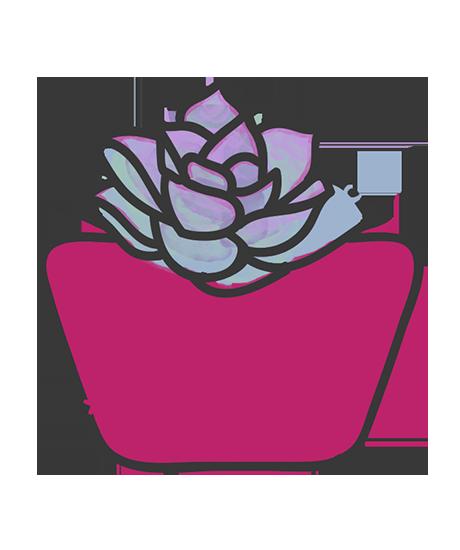 Echeveria Pearl