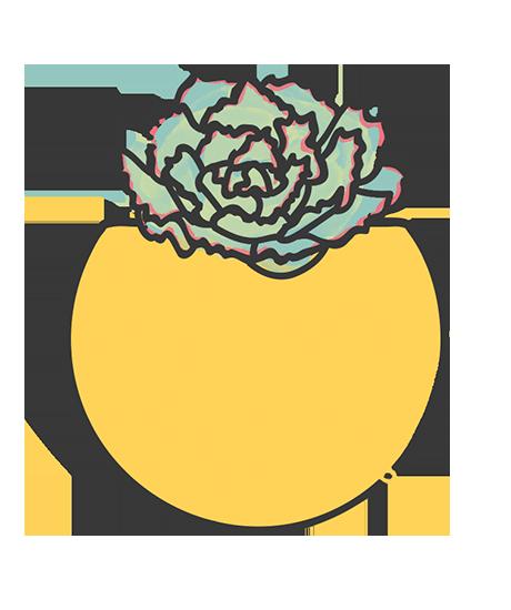 Echeveria Rosy