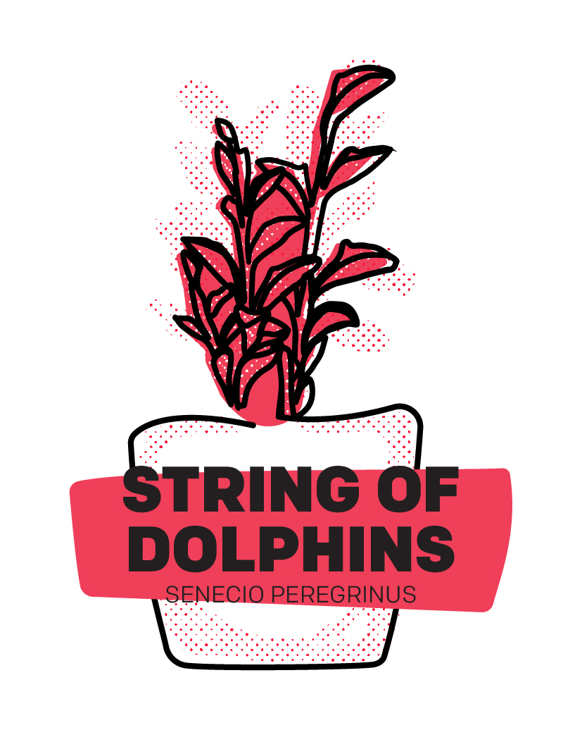 String of Dolphins