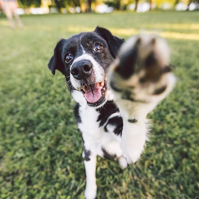 We are committed to providing clear, evidence-based health and wellness information for pet parents to know their furry friends' needs