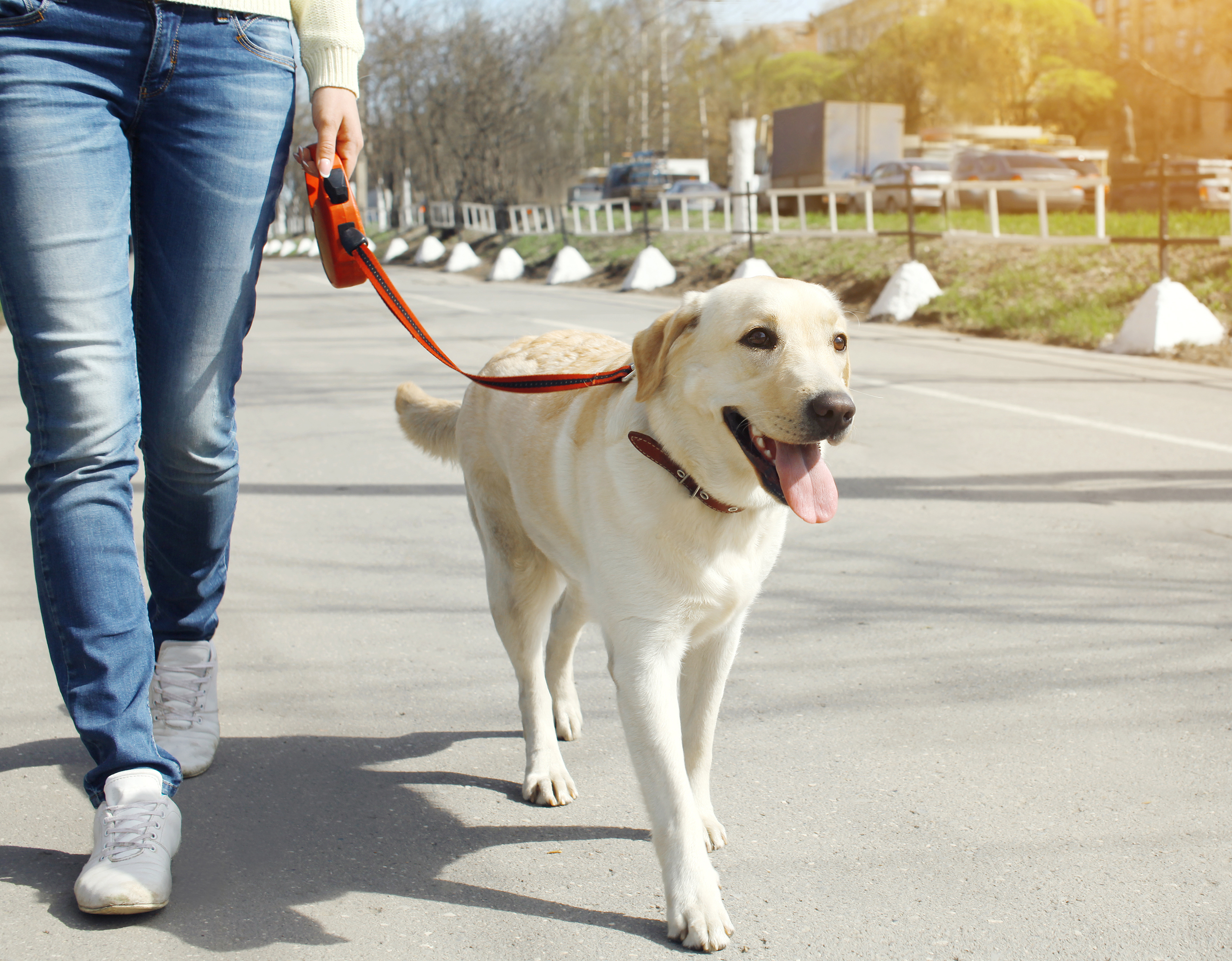Walking your leashed dog in a local neighborhood or at a dog park