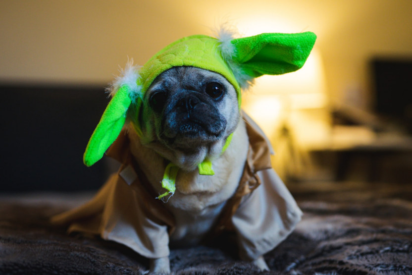 baby yoda dog halloween costume pug