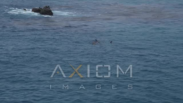 Orbiting seals in the Pacific Ocean, Malibu, California Aerial Stock Footage | AX42_091