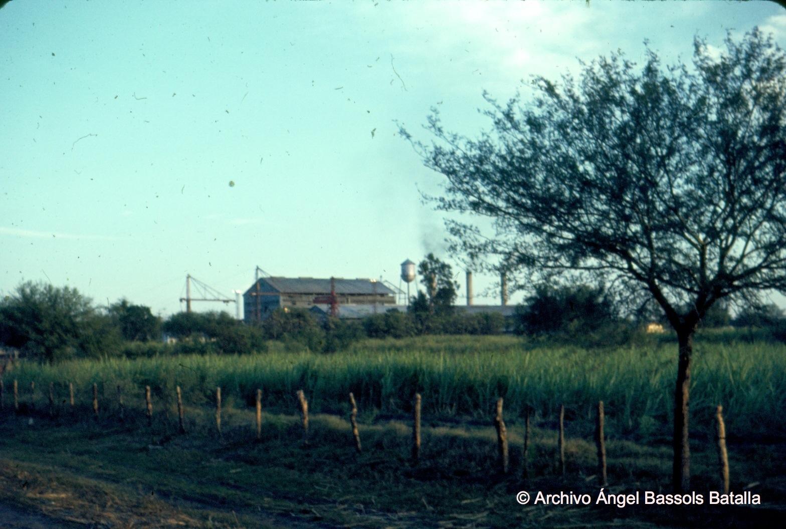 Campos de caña azúcar en Xicoténcatl