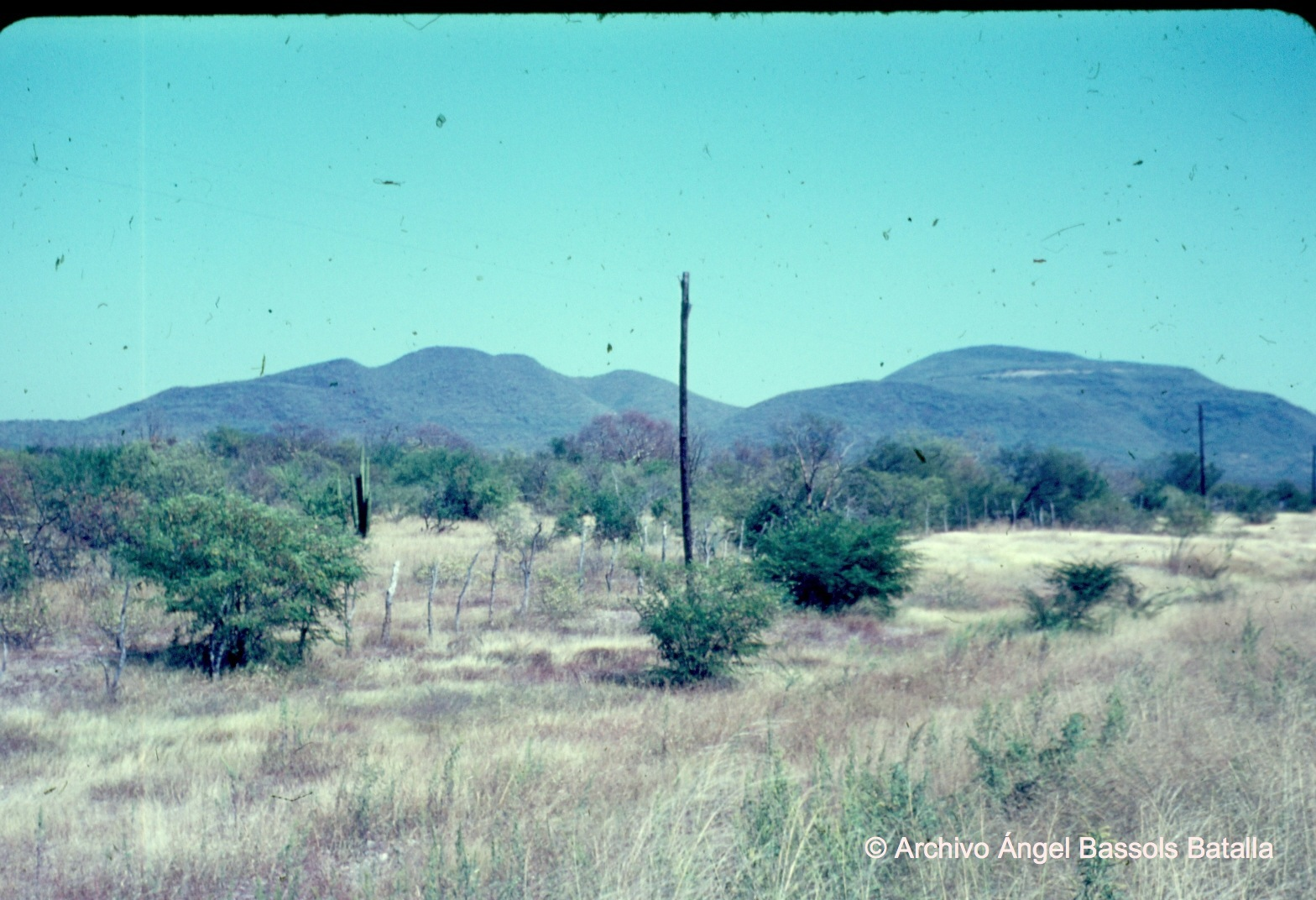 Vegetación entre Navojoa y Álamos
