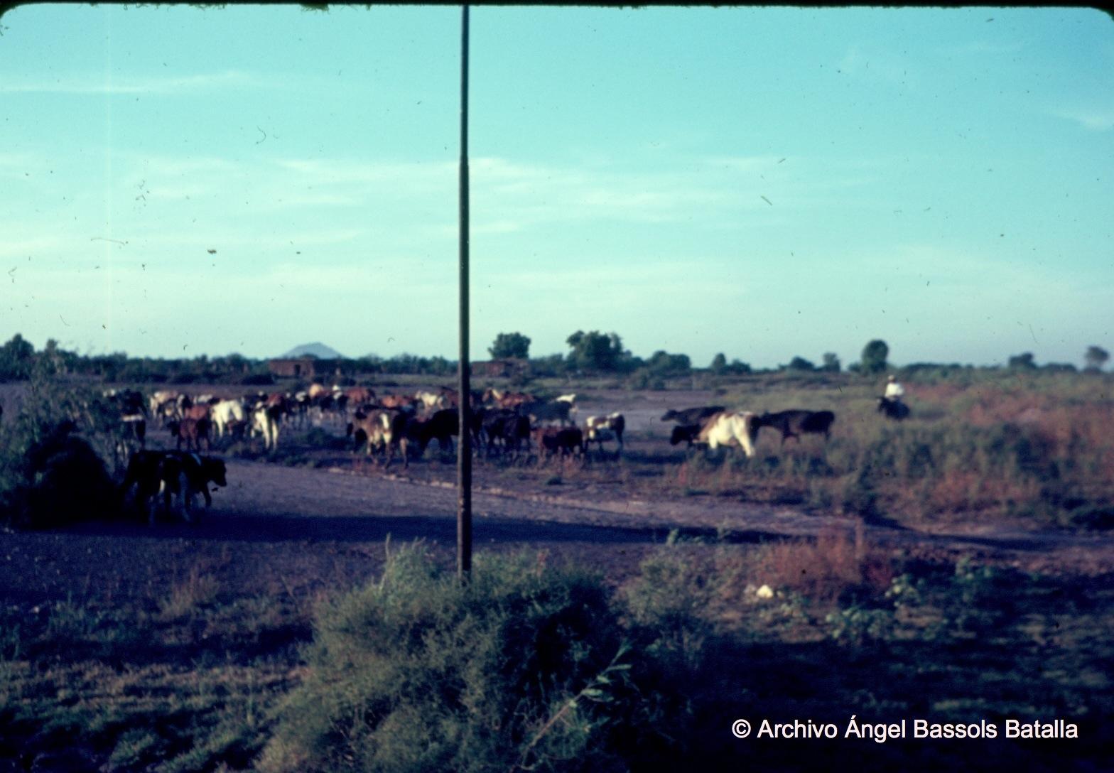 Vaqueros del Valle del Mayo cerca de Etchojoa