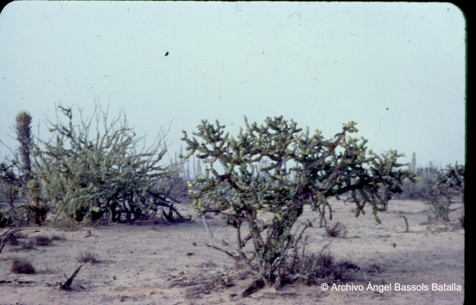 Desierto de Vizcaíno 2