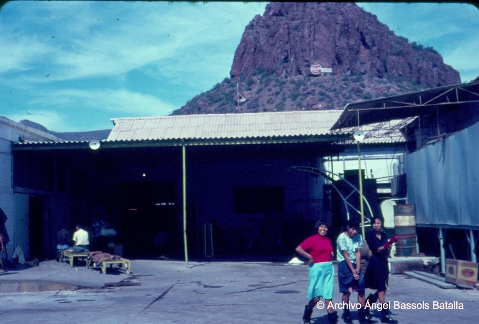 Obreros de empacadora de camarón en Guaymas