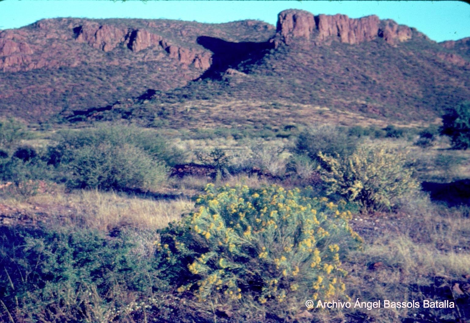 Vegetación cerca de Guaymas