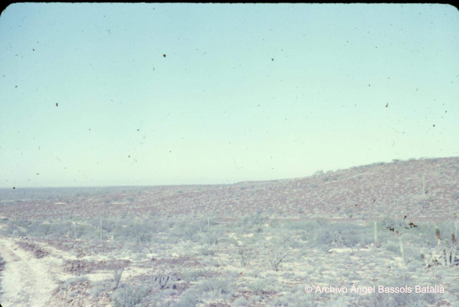 Desierto central