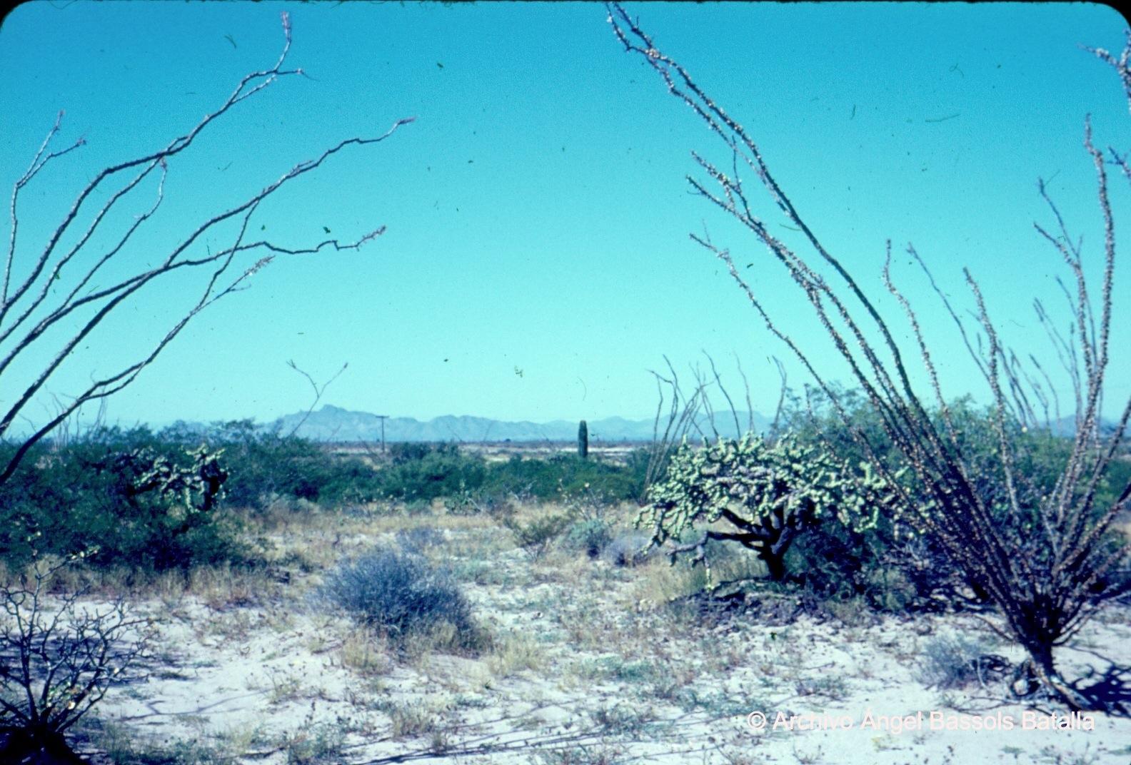 Vegetación cerca de Bahía Kino