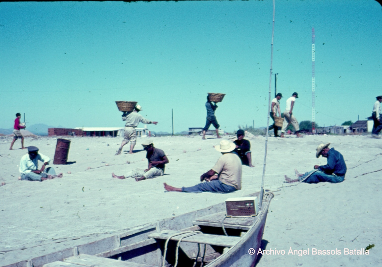 Tejedores en Bahía Kino