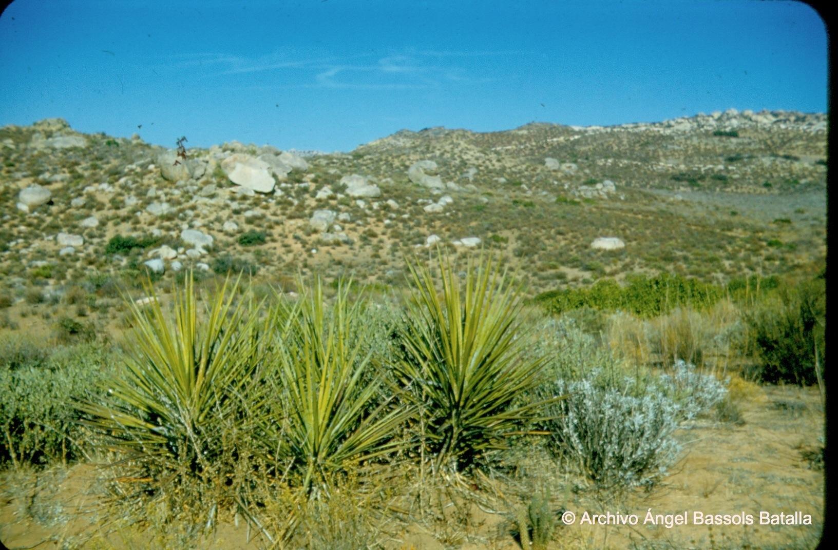 Vegetación de Sierra Juárez
