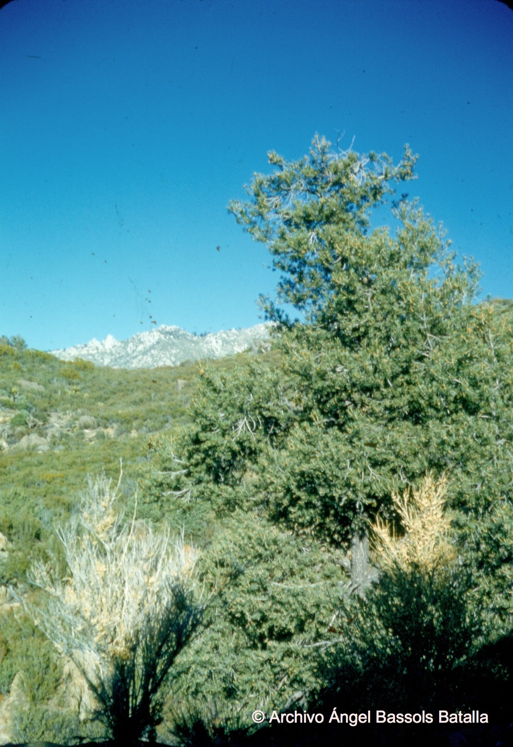 Desde Sierra Juárez