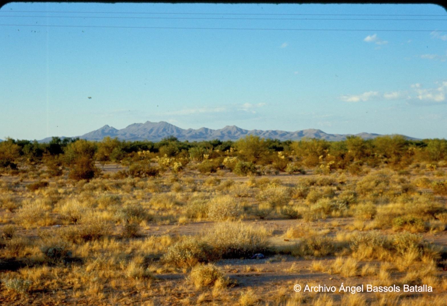 Desierto cerca de Altar