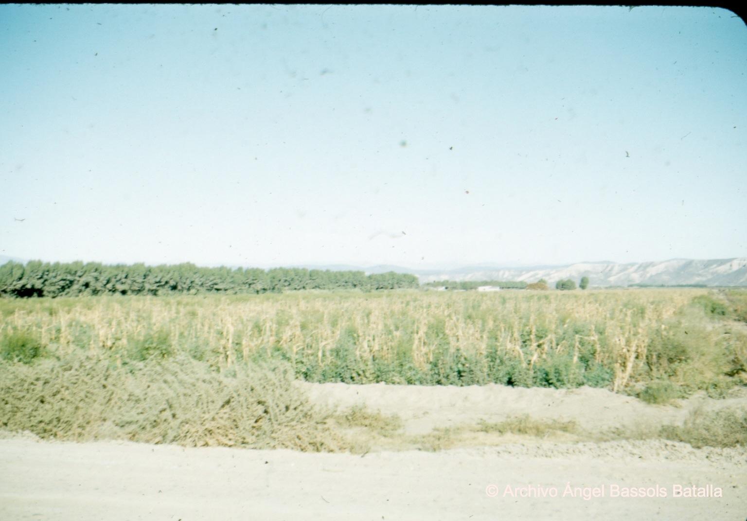 Rancho Santa Gertrudis Col Guerrero 3