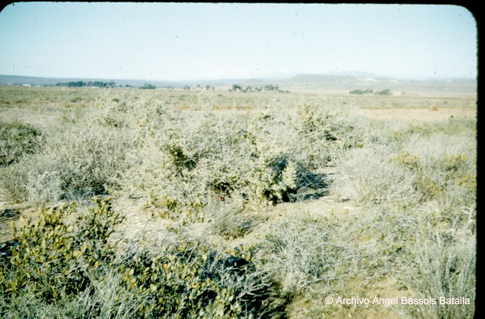 Valle San Quintín 1