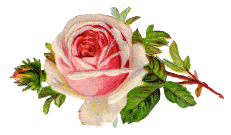 Free Vintage Rose Clip Art By FPTFY