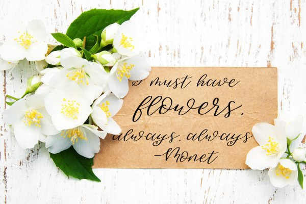 monet quote Sweet Jasmine Script
