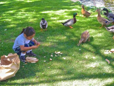 image of children feeding the ducks at Bishop City Park
