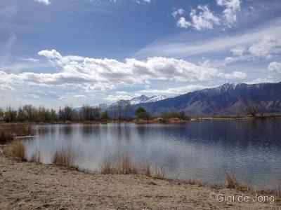 Buckley Ponds
