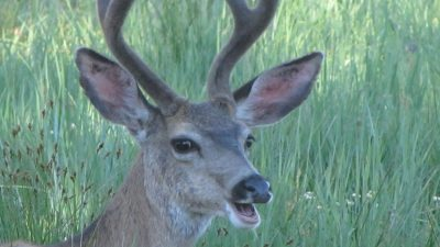 close up of a deer