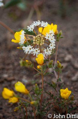 Eastside Wildflowers