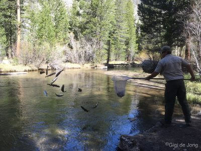 Fish Planting at Sabrina Campground