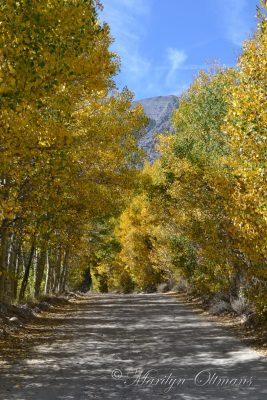 Road to North Lake