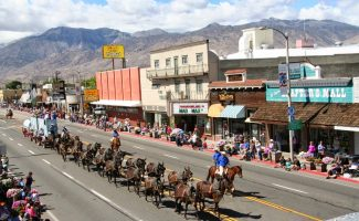 Mule days parade